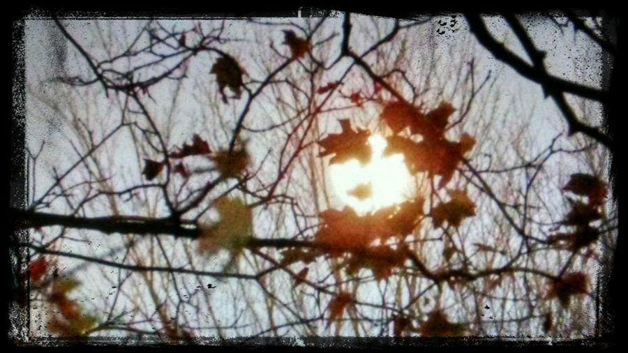 Sky Collection EyeEm Nature Lover EyeEm Moon Shots The Moon