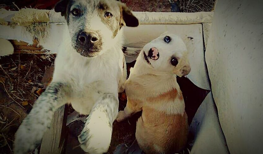 Pets Animal Themes Dog Domestic Animals Mammal No People Togetherness Outdoors Day Rez Dogs Mutts Mutts Are The Best Happniess Looking At Camera