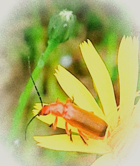 Eyeem Photography Eyeem Photo Color Eyeem Best Shots Eyeem Gallery Check This Out Photos Around You Artphotography Art, Drawing, Creativity Beetles Patterns In Nature Beetle Insect Nature Pattern, Texture, Shape And Form Showcase July 2016 Nature_collection Arlington, Wa