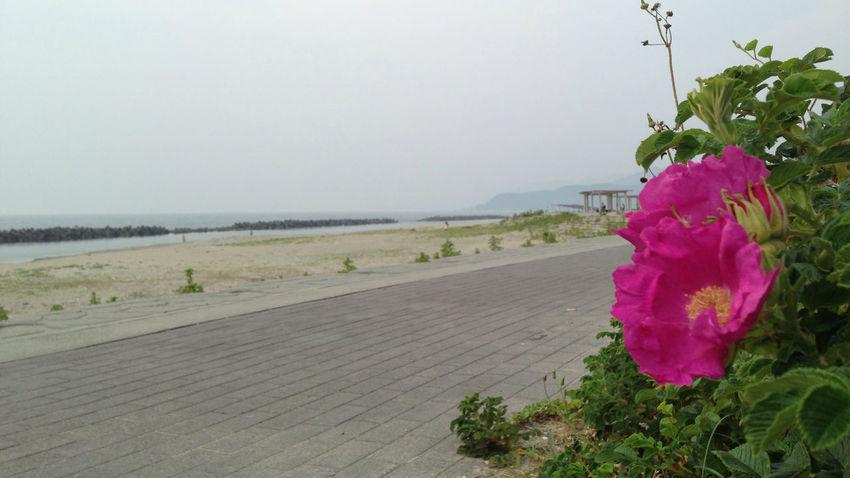 ハマナス Flawers Beach