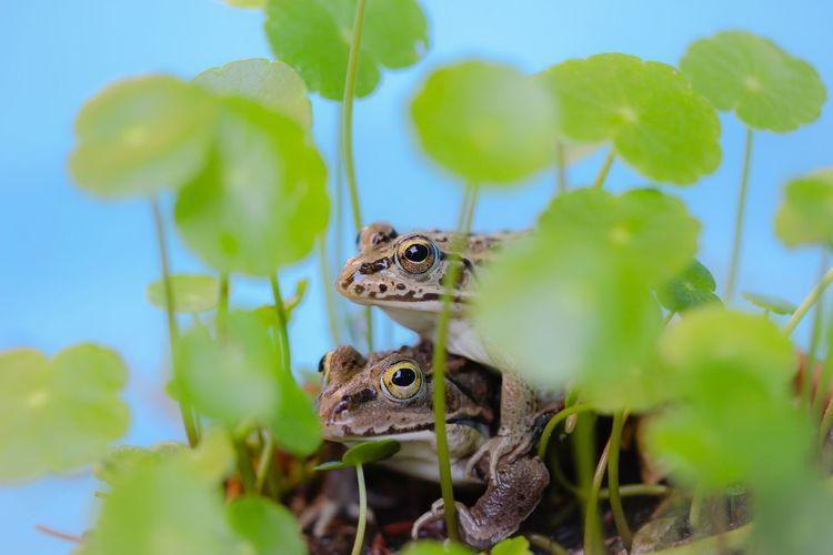 Frog EyeEm Nature Lover Beautiful Nature In My Garden Macro Macro Nature Enjoy Life Nature