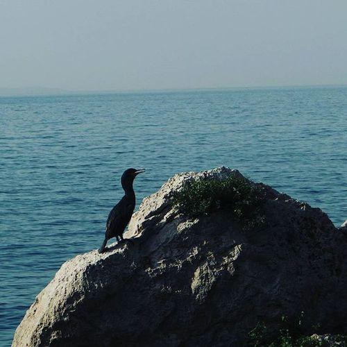 Triest Sea Mediterraneansea Italy Picoftheday Summer Memories Artistic Art