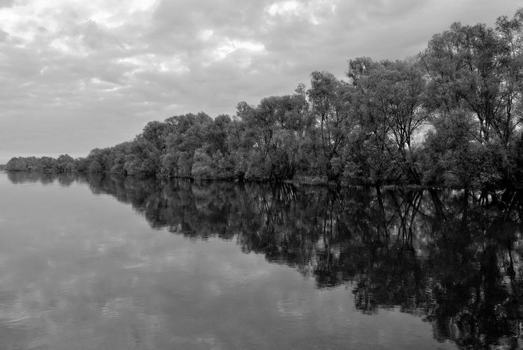 Riverbank Trees Line The Shore Warta Warta River Mouth Landscape Park Water Reflections Beauty In Nature Black And White Clouds And Sky Day Lake Nature No People Outdoors Reflection Riverbank Scenics Sky Tranquil Scene Tranquility Tree Tree Line Trees And Sky Warta River Water