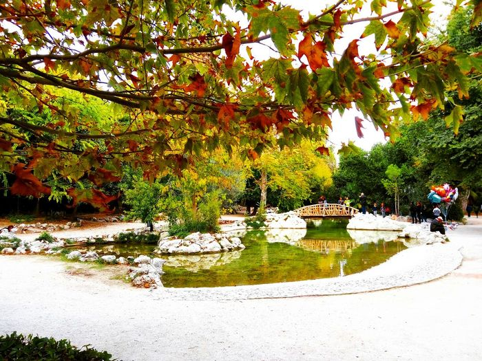 Growth Tree Nature Outdoors No People Green Color Day Water Beauty In Nature Freshness Nationalgarden Autumn Autumn Leaves Autumn Trees Autumn Colors Autumn🍁🍁🍁
