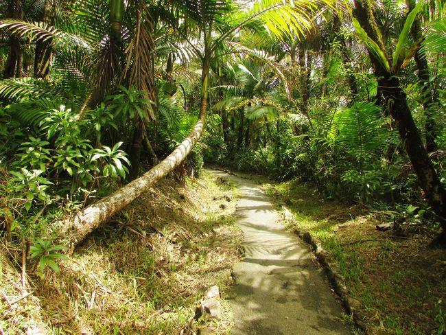 Puerto Rico El Yunque National Park No People