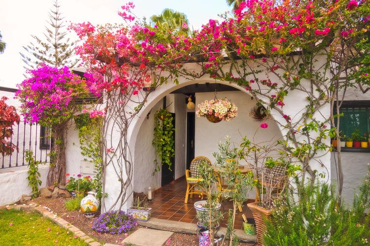 Pink flowering tree by house in yard