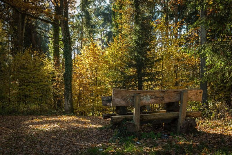 Beauty In Nature Outdoors Tree Nature Autumn Autumn🍁🍁🍁 Herbst EyeEmBestPics Eyemphotography Eyembestshots Colorful Bow Eye Em Nature Lover EyeEm Best Shots Autumn Colors Beauty In Nature Hallo World Tree Seat Forest Forest Trees Blatt, Wald Sitzgruppe Nature