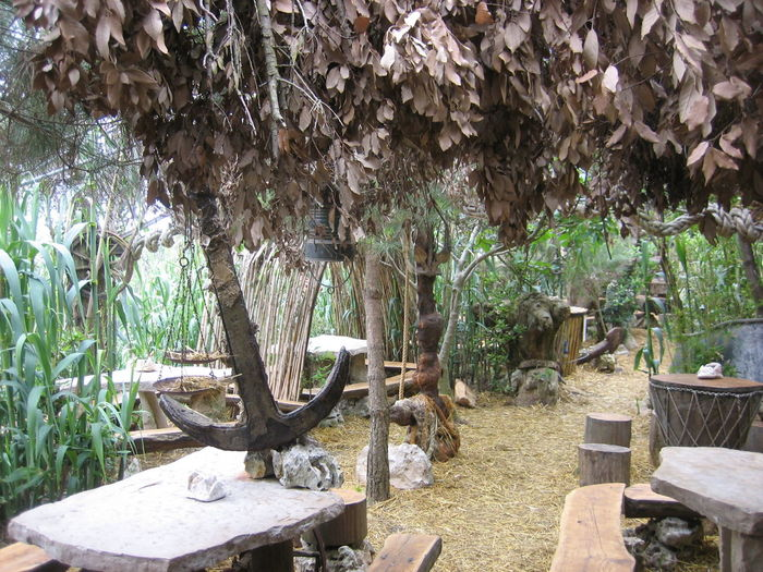 Tree Tree Trunk Plant