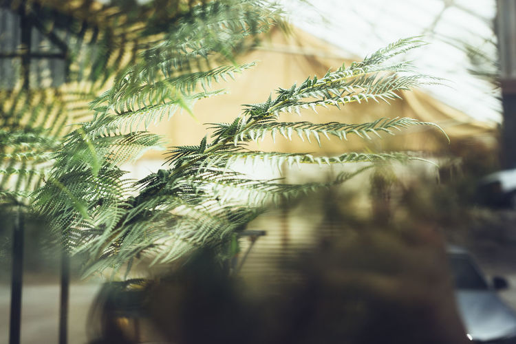 fern Plant Selective Focus Close-up Growth Day No People Nature Tree Outdoors Transparent Focus On Foreground Green Color Glass - Material Window Water Leaf Beauty In Nature Vulnerability