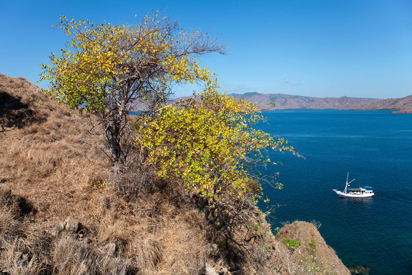 Beauty in Nature Komodo national park on flores island Indonesia Komodoisland Landscape_Collection Beauty In Nature Pulau Komodo Travel travel destination Tourism Indonesia Sea Beach Tourism