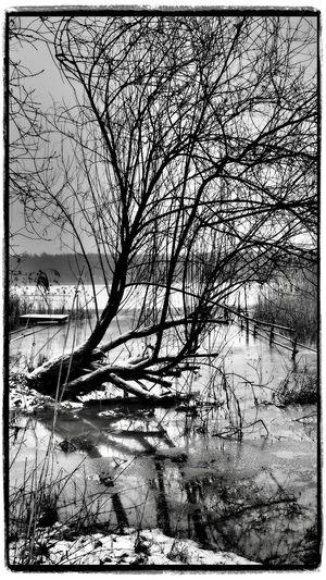 Baum Eis Kahl Landschaft See Seeufer Seeufer Winter