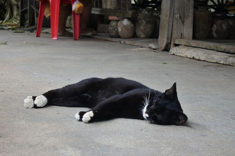 Animal Black
