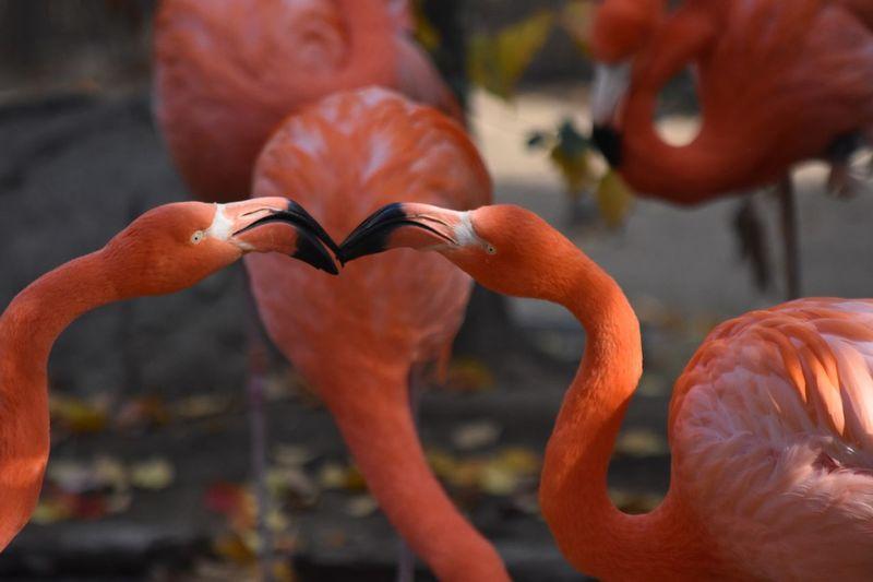 Orange Color Bird Focus On Foreground Flamingo Animals In The Wild Animal Themes Animal Wildlife