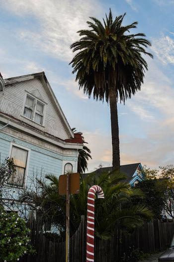 Berkeley California Dream Fantasy Holiday Oakland Outdoors Palm Tree Tree Trunk Urban