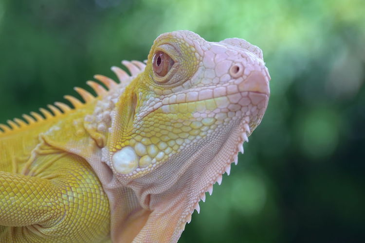 Close-up of a lizard