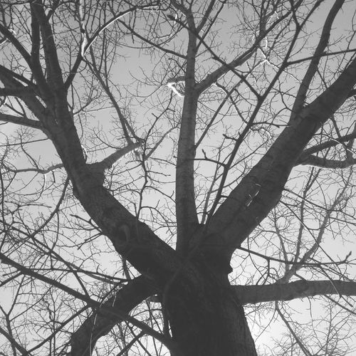 Tree Silhouette P&B Pretoebranco Nature Winter Trees Spring Is Coming  First Eyeem Photo EyeEmNewHere Smartphonephotography