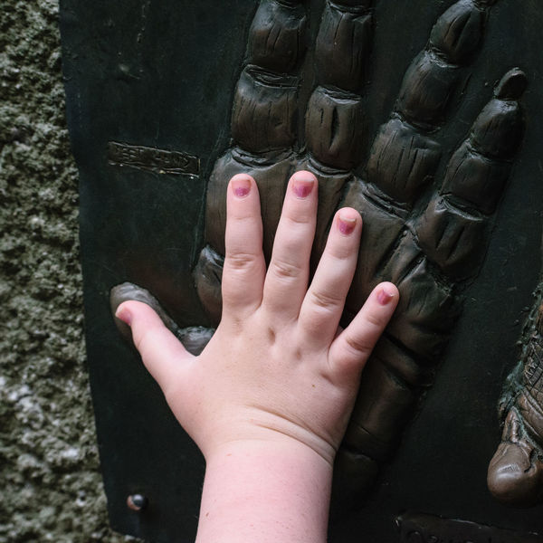 Child Childhood Compare Comparison Gorilla Human Body Part Human Hand People Real People