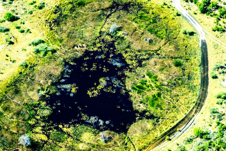 EyeEm Nature Lover Aerial Photography Aerial View Beauty In Nature Day Environment Flooded Road Green Color Growth High Angle View Land Landscape Nature No People Okavango Delta Outdoors Pool Scenics - Nature Tranquil Scene Tranquility Wilderness