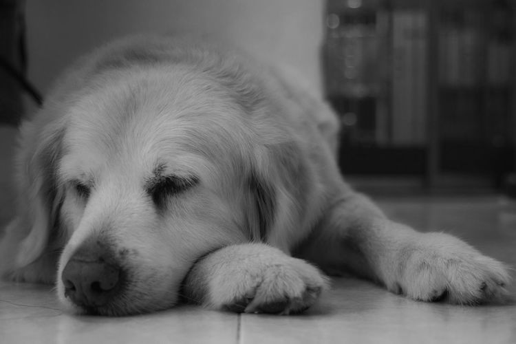 One Animal Pets Dog Relaxation Close-up Indoors  Tim Wong Sony Hong Kong
