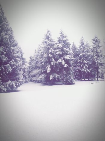 Snow Tree Winter Snowing Scenics Landscape Forest Cold Temperature No People Polar Climate Coniferous Tree Nature Tranquil Scene Outdoors Sky Beauty In Nature Day Frozen Frost Winter Tree Weather frozen forest EyeEmNewHere