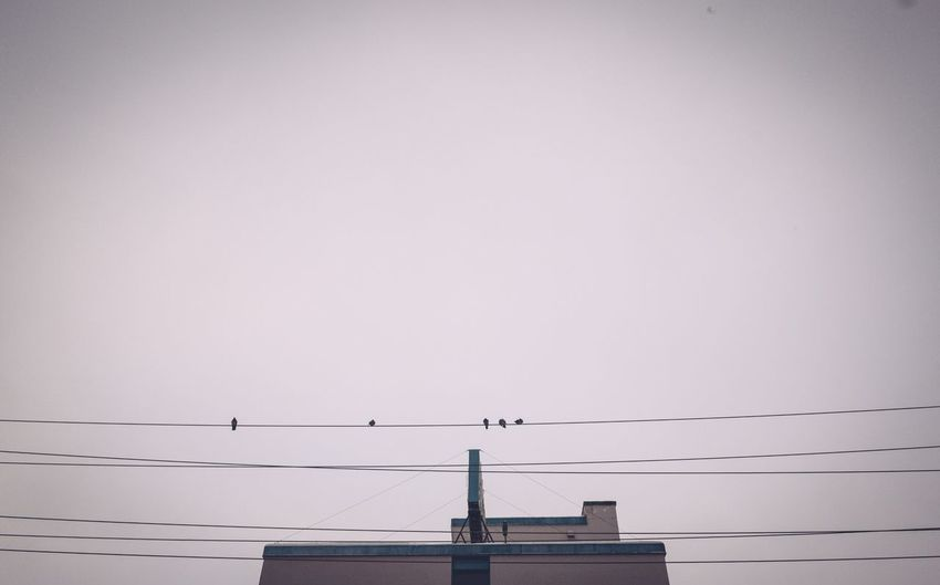 Birds on a wire Birds On A Wire Sky Copy Space Built Structure No People Building Exterior Bird Building Roof Animals In The Wild Animal Wildlife Animal Animal Themes Clear Sky Day Nature Communication Antenna - Aerial Outdoors
