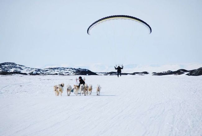 Ilulissat Icefjord World Heritage Adventure Club Wonderfuld Greenland Hanging Out Check This Out Happy Dog Snow Adventure Nature
