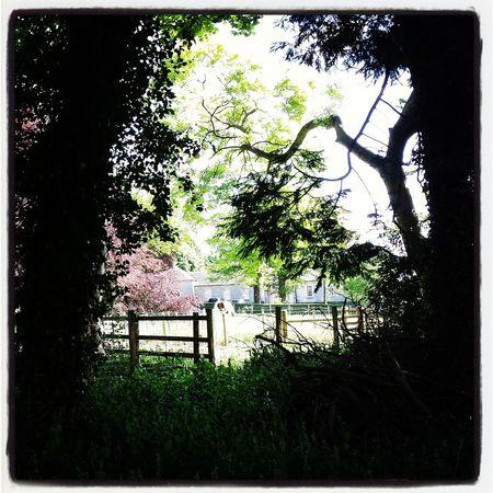 Nature EyeEm Best Shots - Trees