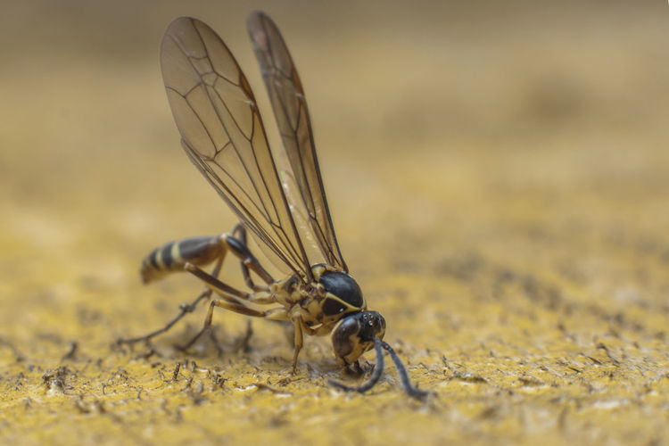 Close-up of fly on rock