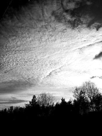 Tree Silhouette Sky Cloud - Sky EyeEmNewHere