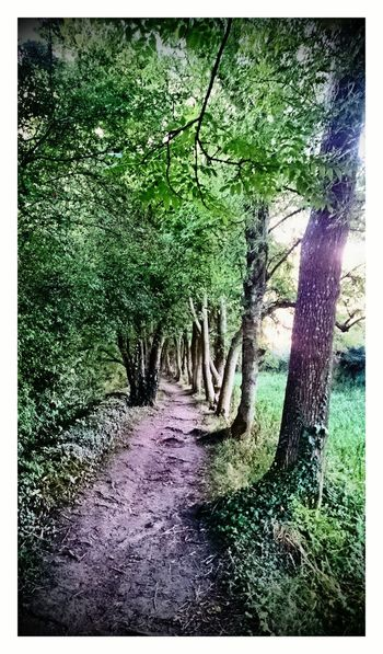 Canal Path Walking In The Woods Footpath Gloucestershire England