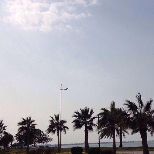 سكر حلوه الدنيا سكر Al Jubail Industrial City Ad Dammam, Al Khobar Jubail صباح_الخير