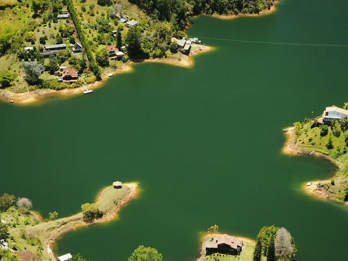 guatape High Angle View Water Lake Landscape Waterscape Reptile Swamp Wetland Sea Life