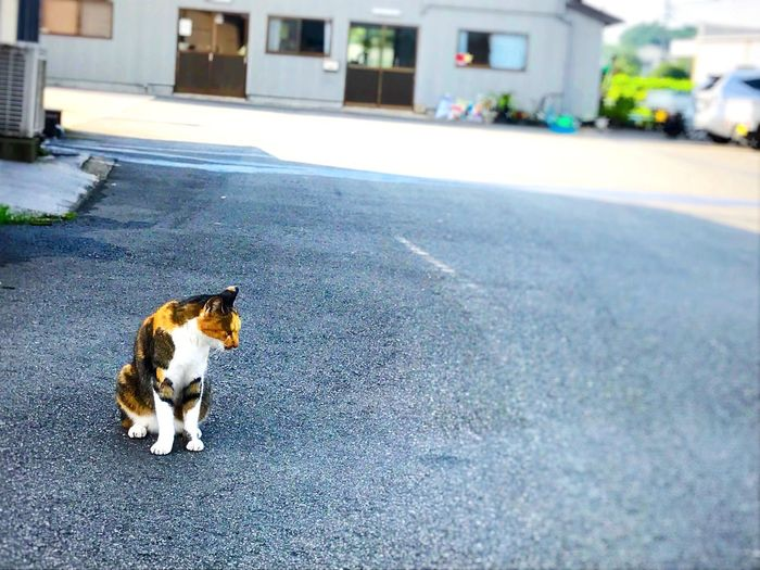 懐っこい猫がいた🐱 猫 Pets 田舎 Road Animal First Eyeem Photo