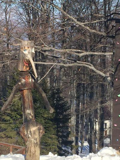 wood imagination