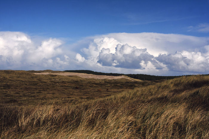 Beauty In Nature Cloud - Sky Day Landscape Nature Nature Reserve No People Outdoors Scenics Sky Tranquil Scene Tranquility