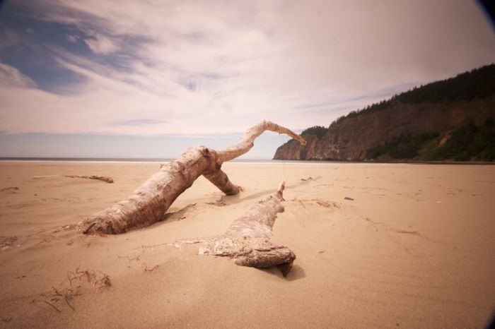 Driftwood Beach Sky Sea Tranquil Scene Sand Tranquility Water Tree Log Scenics Shore Nature Travel Destinations Tree Trunk Non-urban Scene Beauty In Nature Cloud Cloud - Sky Day