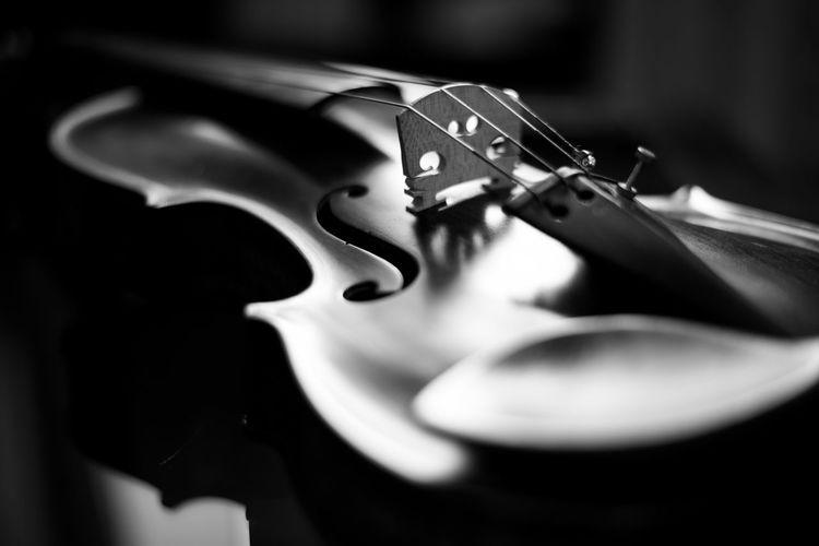 Violin. Violin