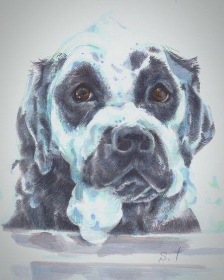 Bath time Petportrait Acrylic Painting Painting #Creating Illustration ArtWork Acrylic Labrador Retriever LabradorRetriever Labradors Dogs