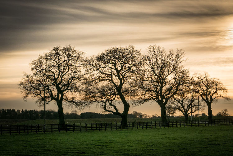 Bare trees on field against sky during sunset