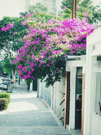 """"""" As flores são bonitas em qualquer lugar do mundo .."""" Flowers :) First Eyeem Photo"""