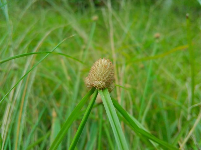 Growth Nature Focus On Foreground Plant Beauty In Nature Grass Outdoors Green Color Field Close-up No People Day Fragility Seed Freshness Flower Head