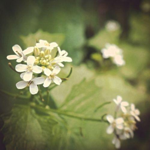 Picoftheweek Photography Digital Art Streamzoo EyeEm Best Edits Taking Photos Flowers Nature EyeEmBestPics