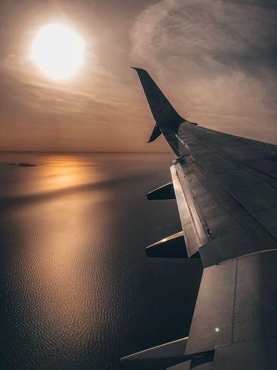 Sunset - Wing