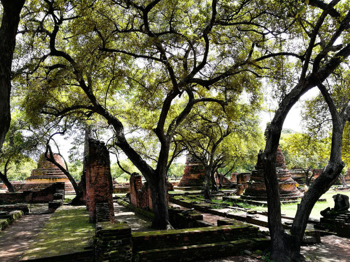 Ancient monument under the tree@ prasrisanphet temple Architecture Tree Outdoors Nature Day Tree Trunk Branch Growth No People Tranquility Sky Beauty In Nature Scenics Tourism Archaeology Ayutthaya, Thailand FreshonEyeem Travel Destinations Historic Building Culture Heritage Travel Local Thailand History Religion