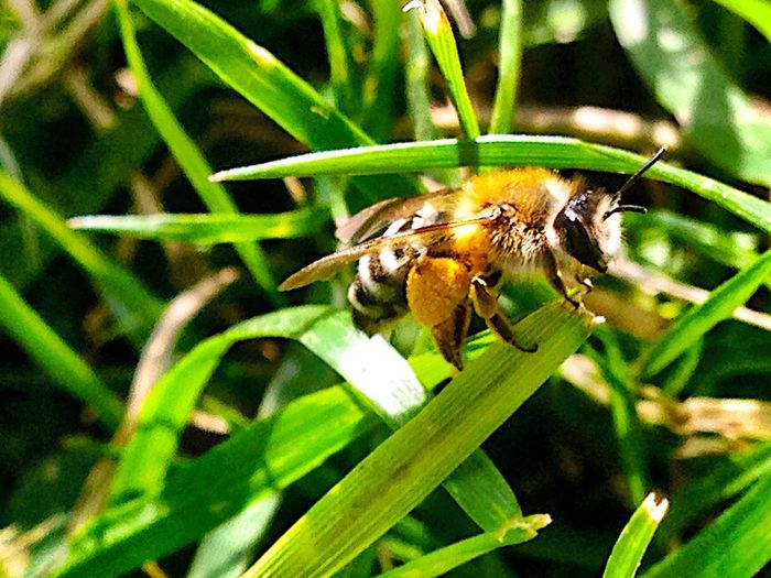 Nature Bee