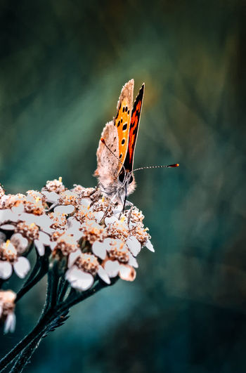 Animal Animal Themes Animal Wildlife Animal Wing Animals In The Wild Beauty In Nature Butterfly Butterfly - Insect Close-up Flower Flower Head Flowering Plant Focus On Foreground Fragility Insect Invertebrate Nature No People One Animal Outdoors Petal Plant Pollination Springtime Vulnerability