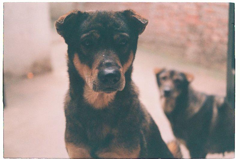 Close-up of stray dog