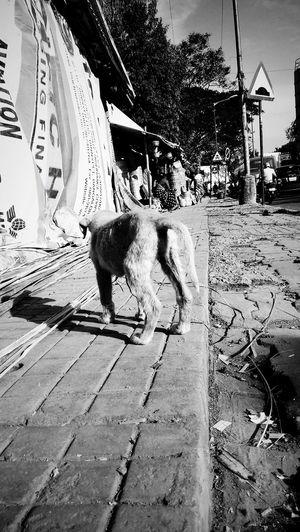 B&w Street Photography Rural India Streetdog Streetside
