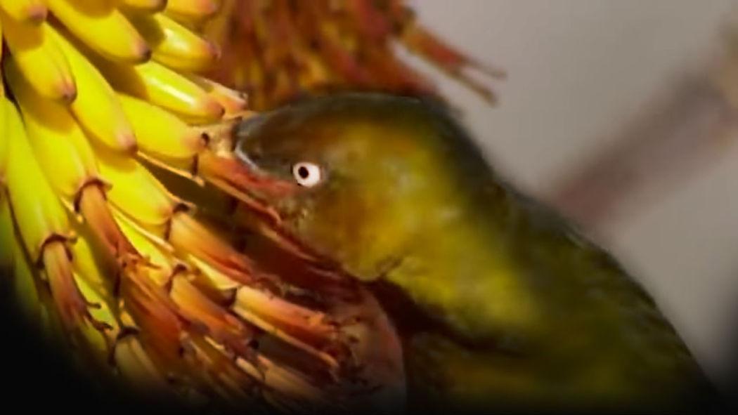 Bird and Banana Bird Banana Flower Banana Fruit UnderSea Sea Life Underwater Close-up