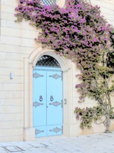 Maltese Door Pink Plant Wall Climber